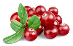 cranberry-2016-fotolia