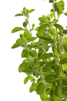 12 plantas medicinais que podem ser cultivadas no seu jardim